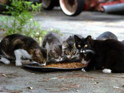 cibo gatti strada
