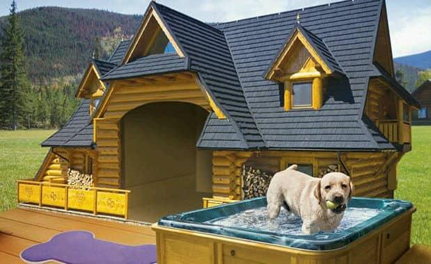 Cucce Per Cani Moderne.Le Cucce Da Esterno Piu Stravaganti E Costose I Nuovi Designer