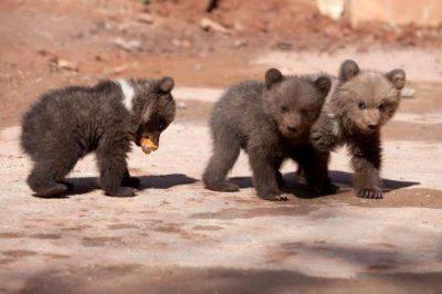 uomo spara uccide orsi