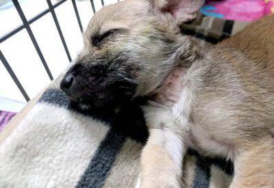 cucciolo ferito salvato