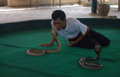 veleno serpenti