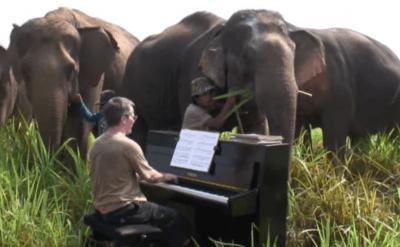 musica animali