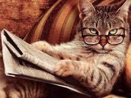 Il Gatto Sottovalutato è In Realtà Uno Degli Animali Piu