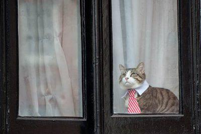 assange gatto
