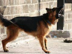 abbaiare cane