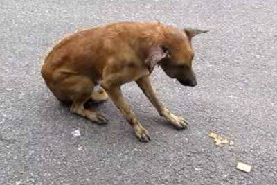soccorso animali