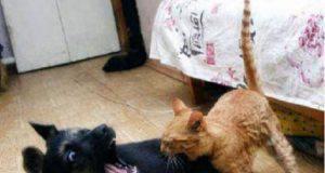 gelosia cane e gatto