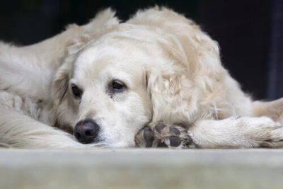 malate letali cane