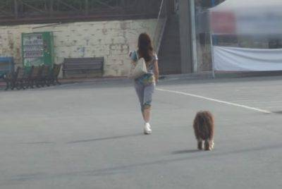 fedeltà cani
