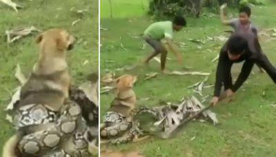 pericoli cani