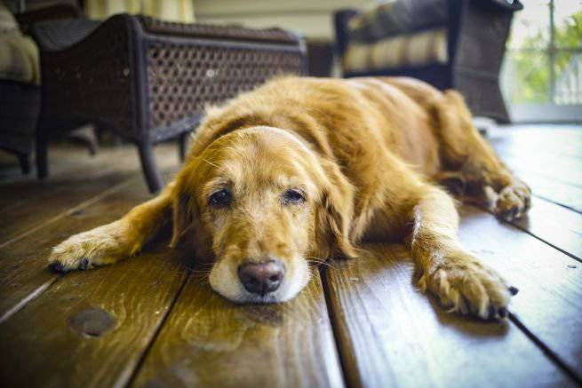 disturbi cognitivi cane