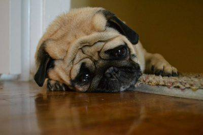 ansia separazione cane