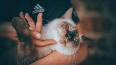 gatto carezze