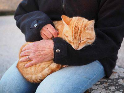 persone e gatti