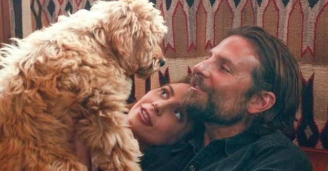 Bradley Cooper scrittura il suo cane