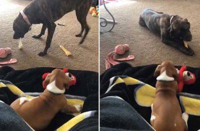 cuccioli e cani anziani