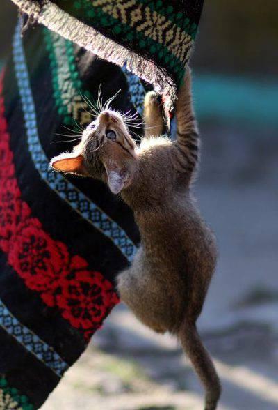 gioco per gatti