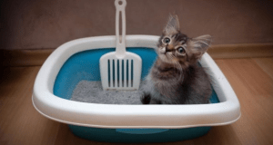 educare un cucciolo di gatto