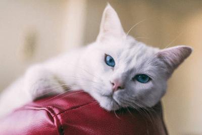 vivere con gatto