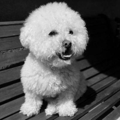 cane aiuta contro depressione