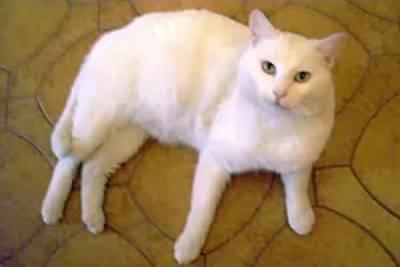 gatto sparito