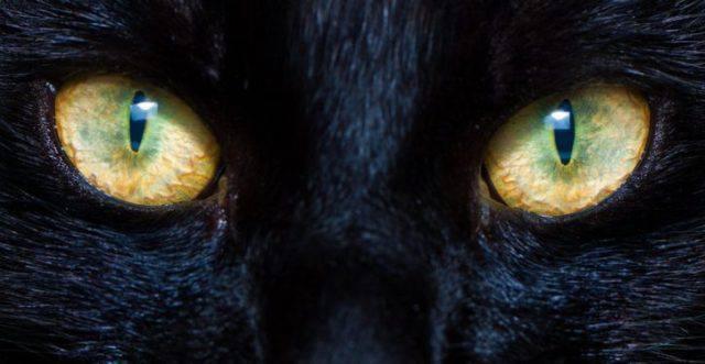 gatti scacciano spiriti maligni