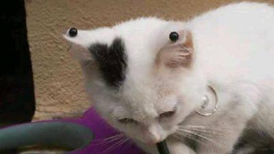 maltrattamento gatti