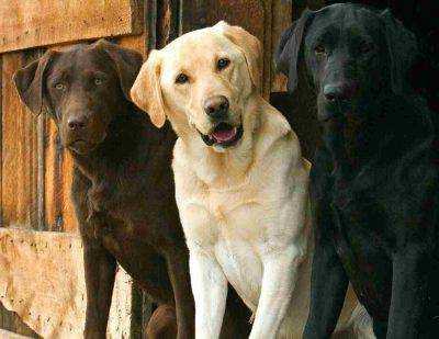 manto cane longevità