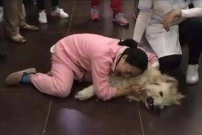 cane commovente