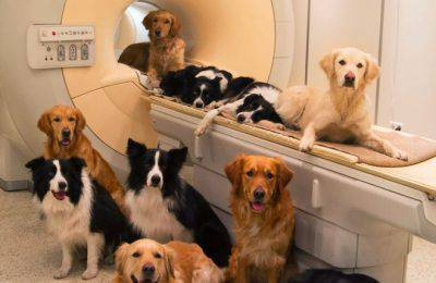 intelligenza cani