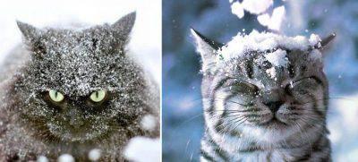 gatto freddo