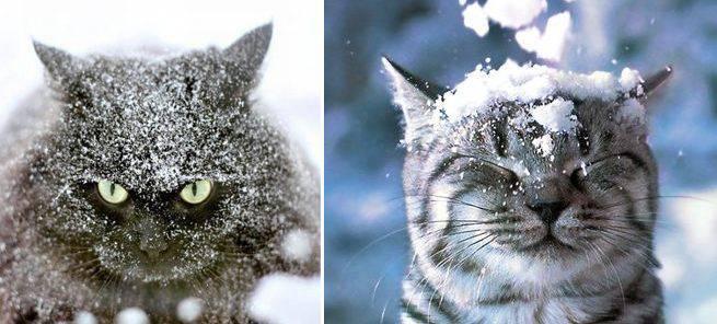 Arriva il gelo il gatto soffre il freddo come for Il gatto inverno