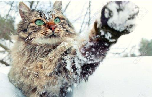 proteggere gatto dal freddo