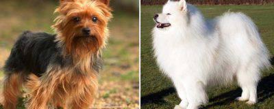 razze cani che abbaiano