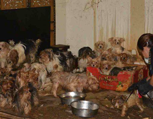 accomulatori di cani