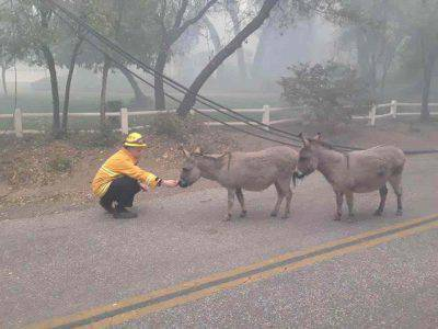 incendi soccorso animali