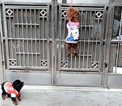 cani fuggitivi