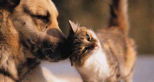 intossicazione farmaci cane gatto