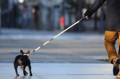 divieti su cani