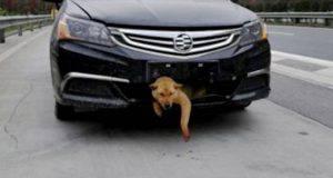 incidenti stradali animali