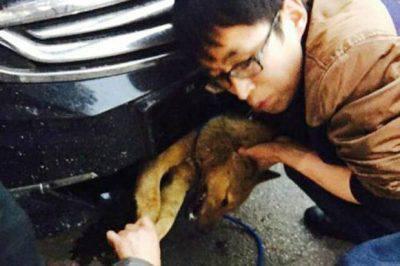 incidenti stradali cane