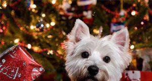 natale regali cane