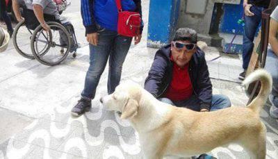 salvare cane dalla strada