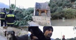 uccisione animali