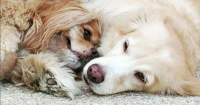 cecità cani