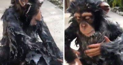 animali video divertenti