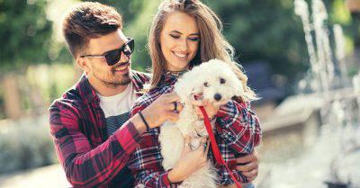 cane nella coppia