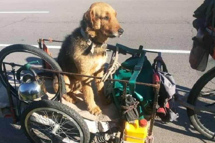 giovane cane bicicletta