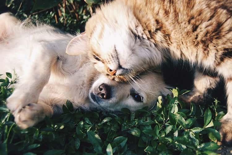 cani gatti malattie