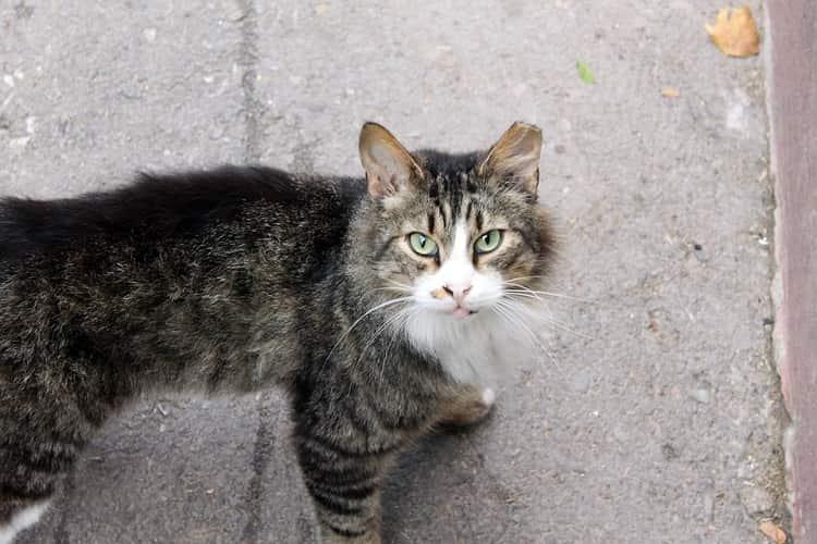multata soccorso gatto